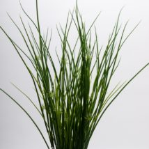 Mexican grass bush x9 cm.71
