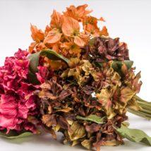Ortensia bouquet