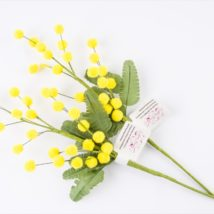 Mimosa incartata pz.12 a08761