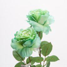 Rosa georgia pz.3