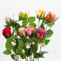 Rosa bud cm.49 pz.12