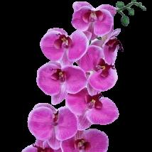 Orchidea ramo x9 fiori pz.2
