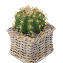 Cactus cm.12,5x20