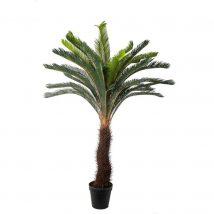 Pianta cycas 40 foglie cm.190